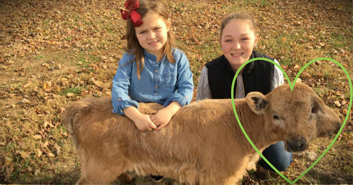 godupdates family calls lucky the two-headed calf a miracle fb heart