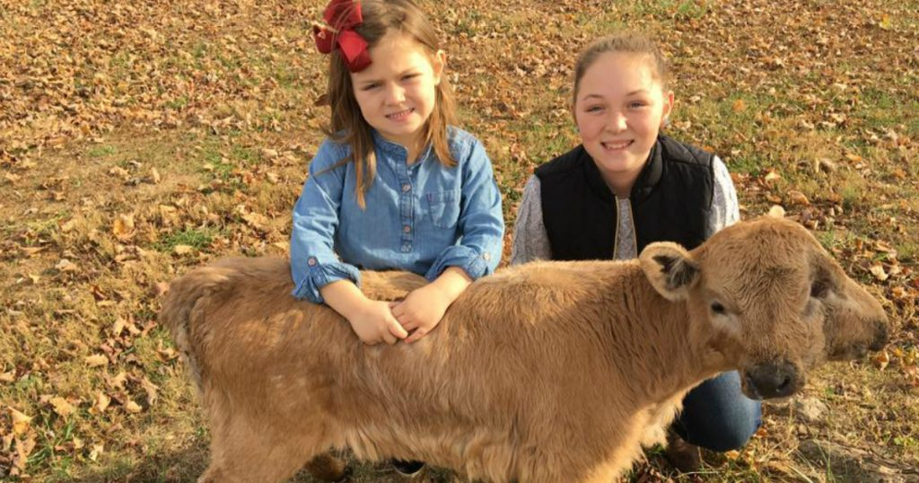 godupdates family calls lucky the two-headed calf a miracle fb no circ