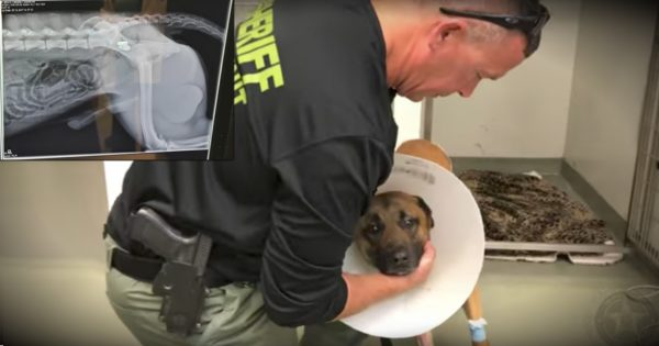 Heroic K9 Officer Takes A Bullet To Save His Partner