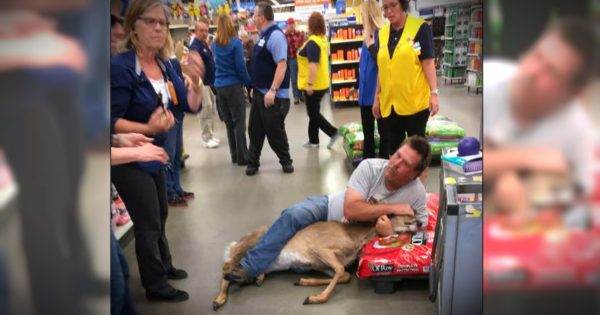Unsuspecting Shopper Takes Down A Stray Deer In Walmart