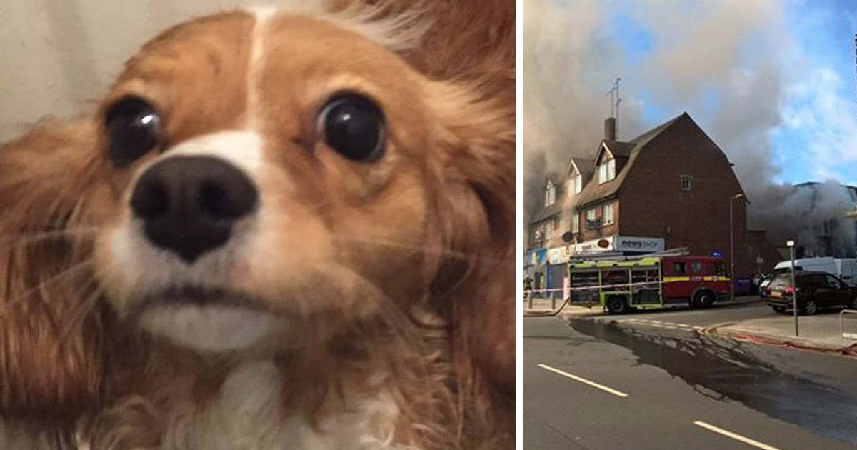 heroic dog saves pregnant woman _ fire _ daisy _ god updates