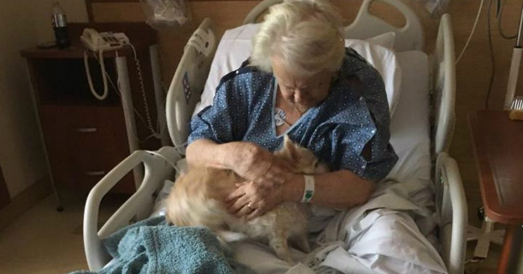 godupdates granddaughter sneaks sick grandma's dog wrapped in a baby blanket into hospital 1