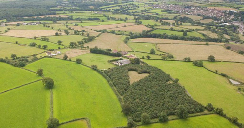 godupdates grieving farmer creates heart-shaped meadow to honor late wife 2