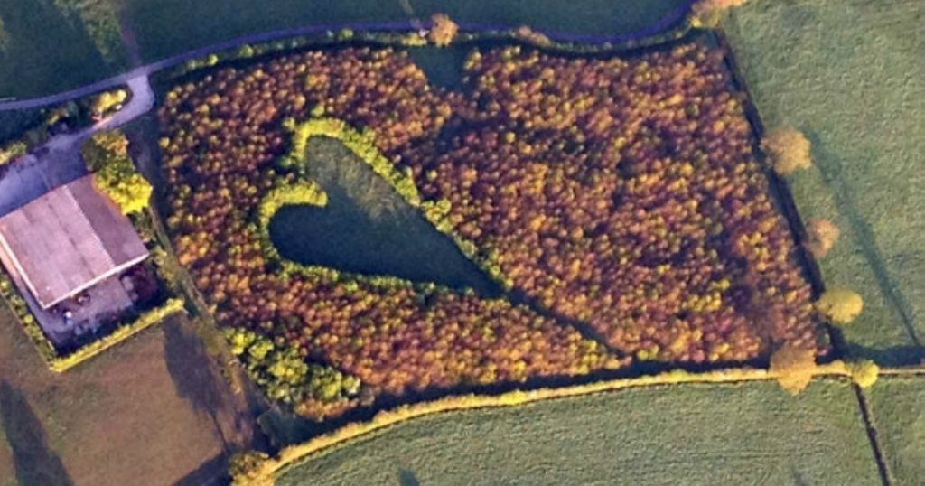 godupdates grieving farmer creates heart-shaped meadow to honor late wife 3