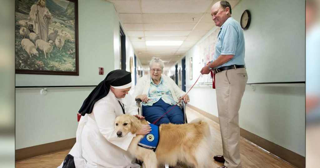 godupdates miracle dog overcomes years of therapy to give therapy to others 1