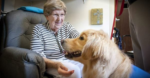 Miracle Pup Overcame Years of Therapy to Give Therapy to Others
