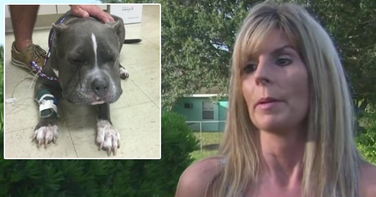 godupdates Rattlesnake Bit The Brave Dog Named Beast Who Shielded His Owner 1