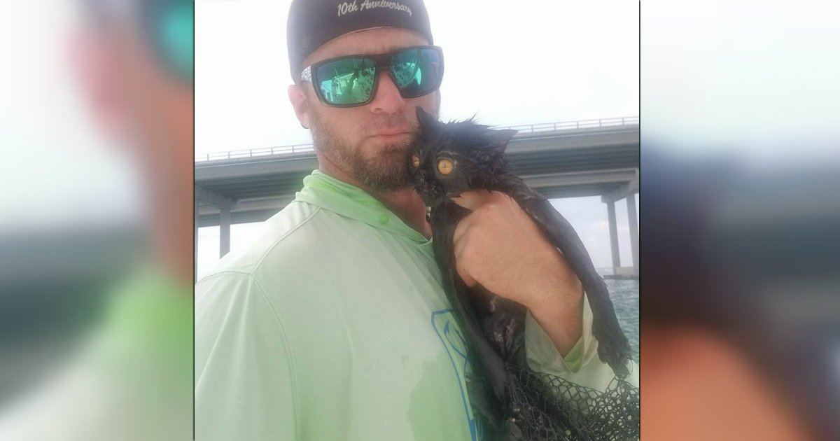 godupdates boat captain rescued the black cat thrown from bridge fb