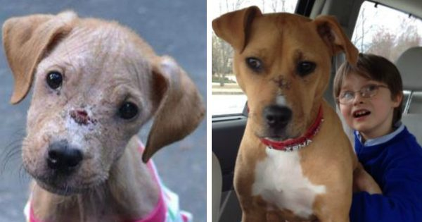 Emaciated Pup And Boy with Autism Found Healing Together