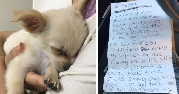 Abandoned Dog Found In Bathroom With A Letter Explaining Everything