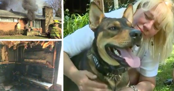 Rescue Dog Risks Life Dragging Woman Out Of Blazing House Fire