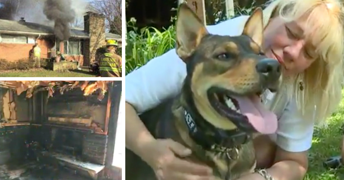 godupdates rescue dog managed to drag his owner out of house fire fb