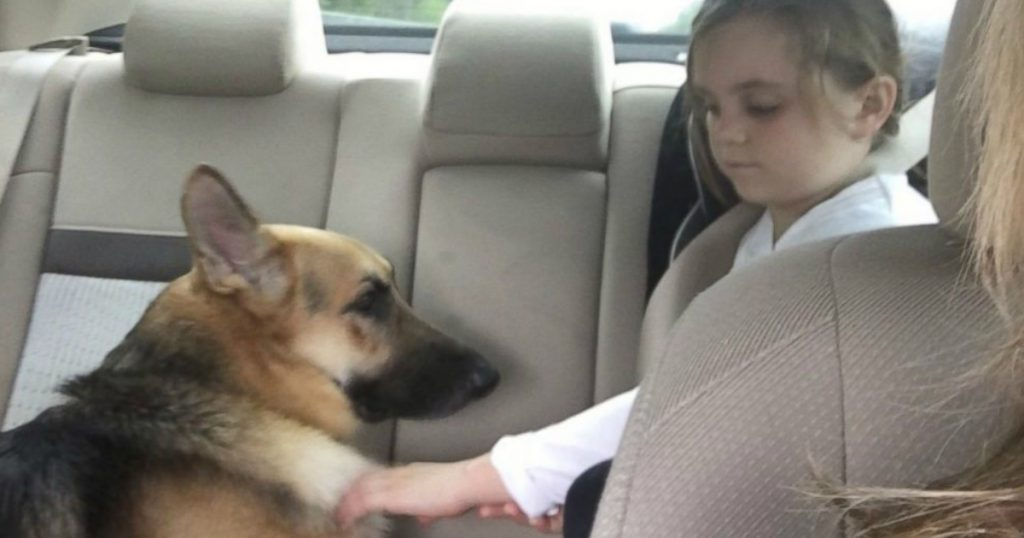 godupdates rescued german shepherd shielded 7-year-old from rattlesnake bite 2
