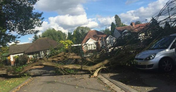 Woman Credits Guardian Angel For Her Safety After Huge Tree Crushes Her Car