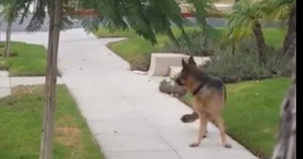 loyal dog freezes on sidewalk_ godupdates