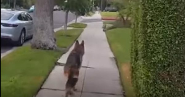 Loyal Dog Has Cutest Reaction To Finding His Sneaky Human