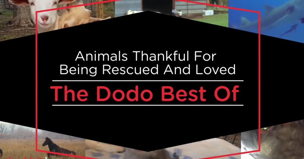 Animals Thankful For Being Rescued Compilation