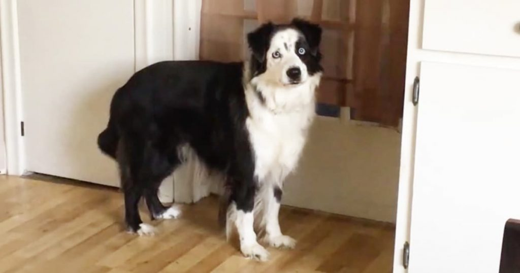 Dog Stomps Feet To Go Back Outside