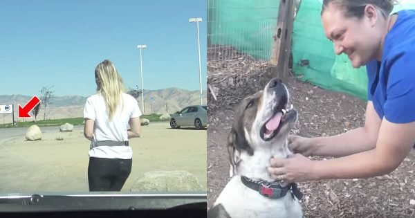 Dog Stranded At Gas Station For 2 Months Finally Gets Rescued