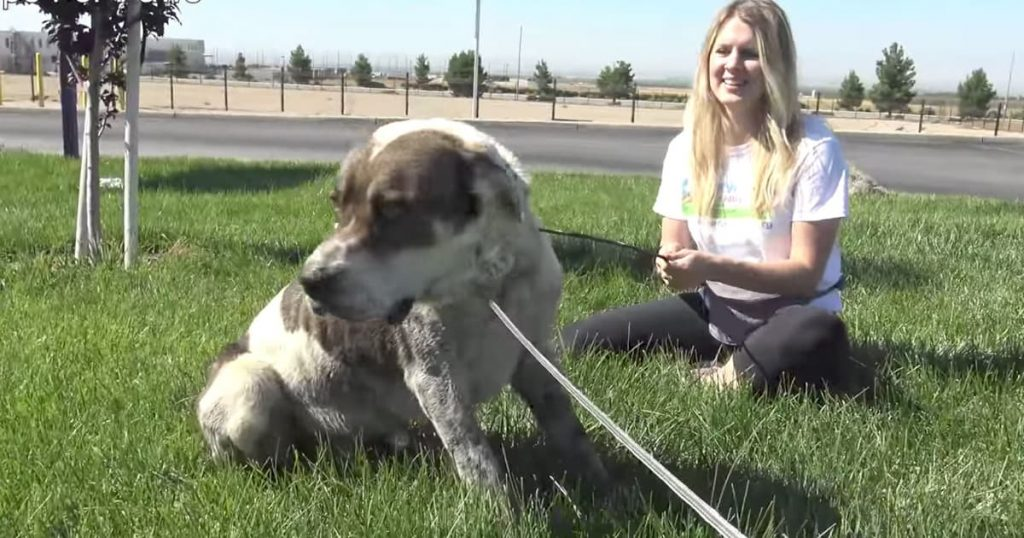 Dog Stranded Rescued By Hope For Paws