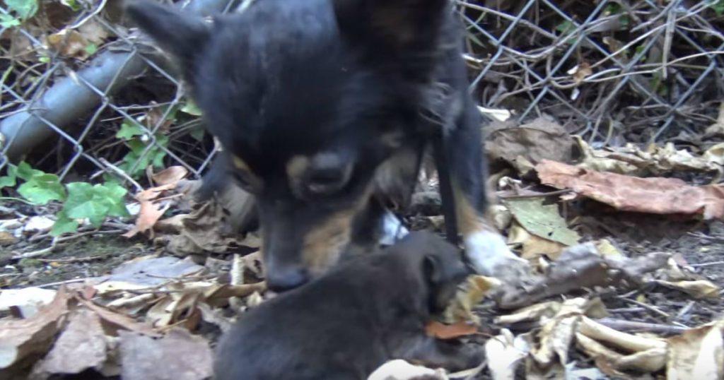 godupdates animal rescue team returns stolen puppies