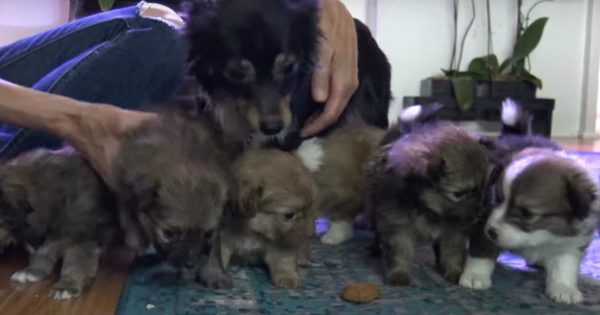 Momma Dog Fights Rescuers Fearing For Her Puppies
