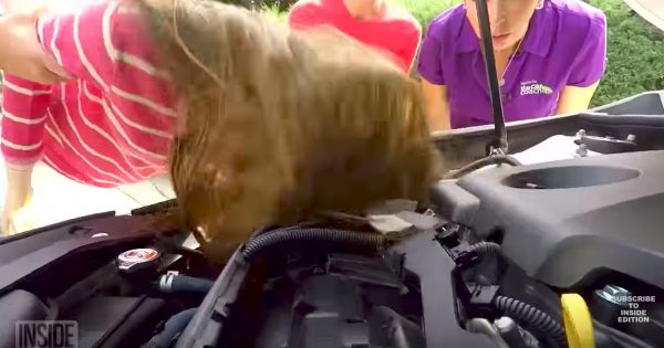 Mom Of 4 Tragically Scalped While Working On Her Car