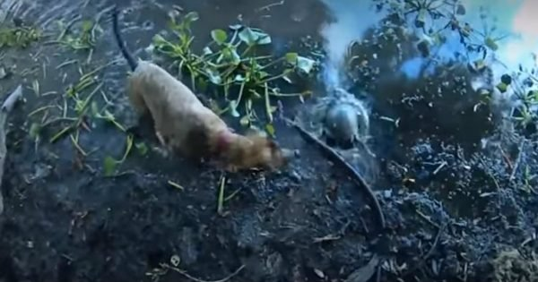 Dog Helps Save A Turtle That Was Terribly Tangled Up