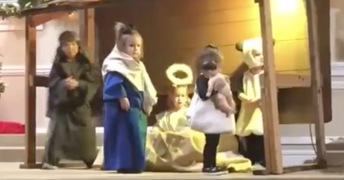Sheep Takes Baby Jesus During Children's Nativity