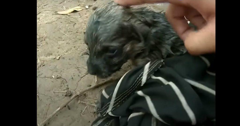 godupdates man saves drowning puppy