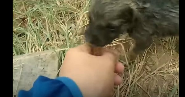 A Man Spotted A Drowning Puppy And He Tried To Save Him
