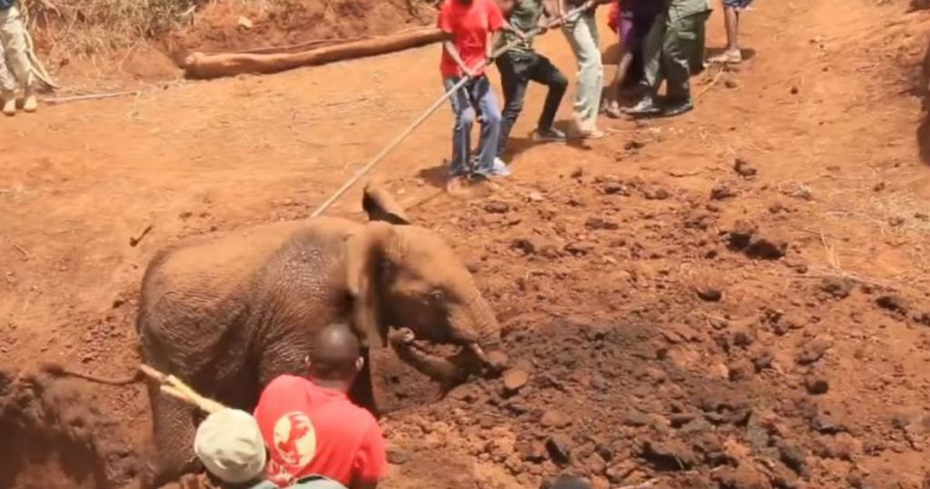 godupdates young elephant fell