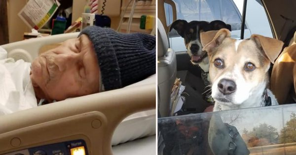 Dying Man Heartbroken To Leave His Fur-Baby Behind Asks For Help