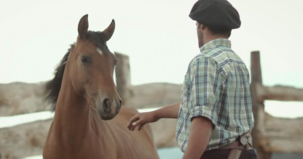 Cowboy Tames A Wild Horse In Just 3 Hours