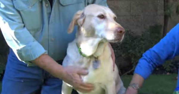 Bred And Dumped This Beautiful Dog Gets The Rescue She Deserves