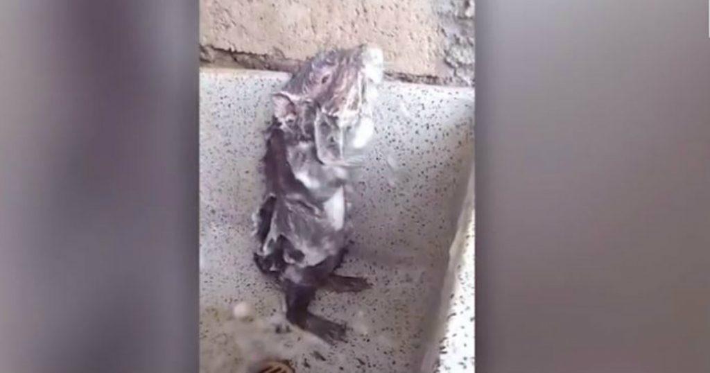 godupdates rat showering like humans