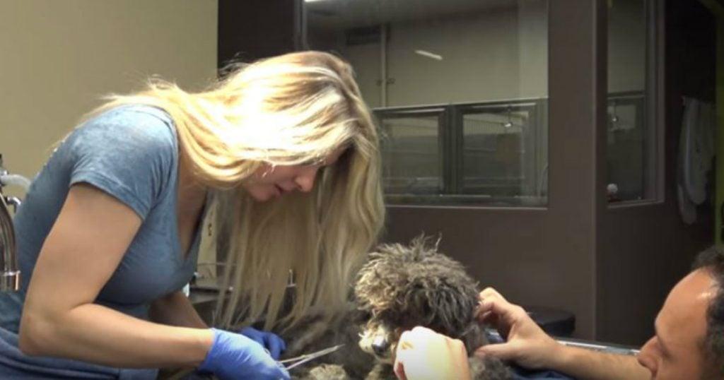 godupdates team performs dog rescue