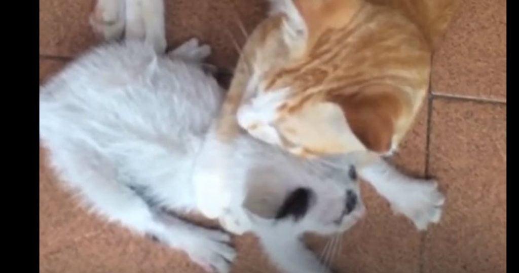 godupdates tiny kitten rescued
