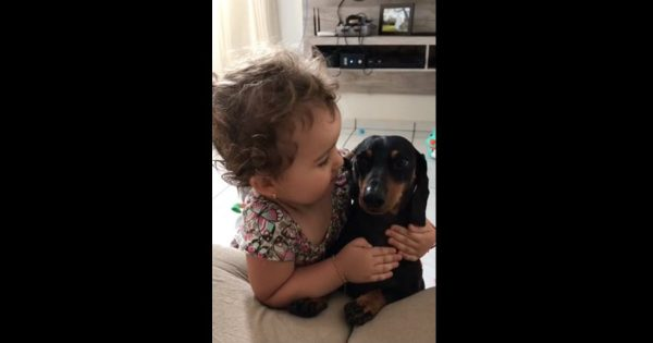 Little Girl Snuggles With Her Patient Puppy