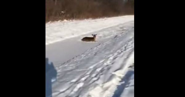 Farmer Rescues A Stranded Deer In The Most Beautiful Way
