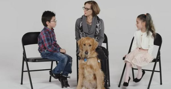 6 Children Meet A Real Life Guide Dog And They Are So Fascinated