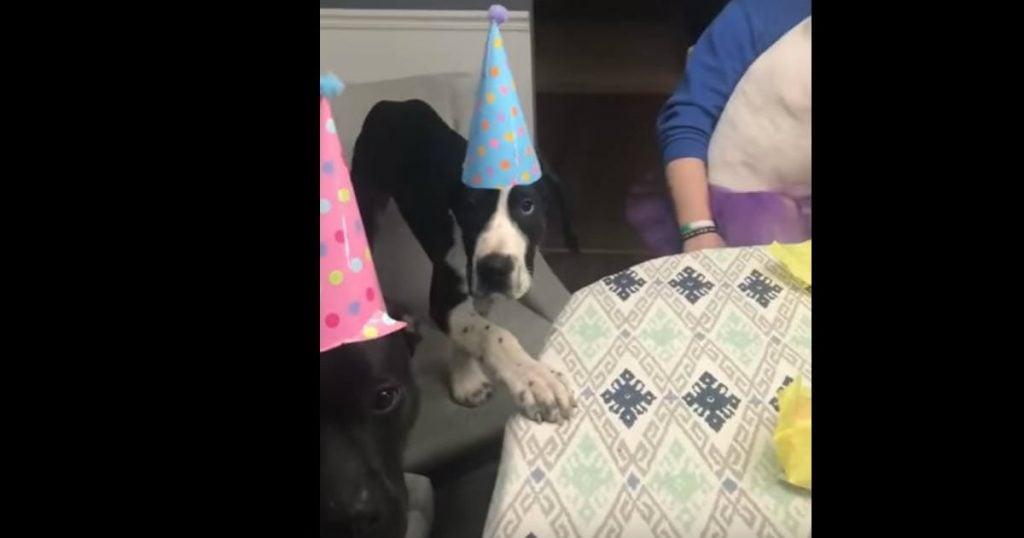 godupdates doggy birthday party