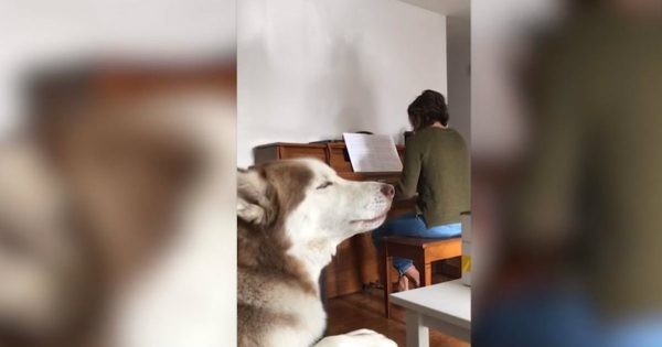 Dog Begins To Sing When His Owner Played The Piano