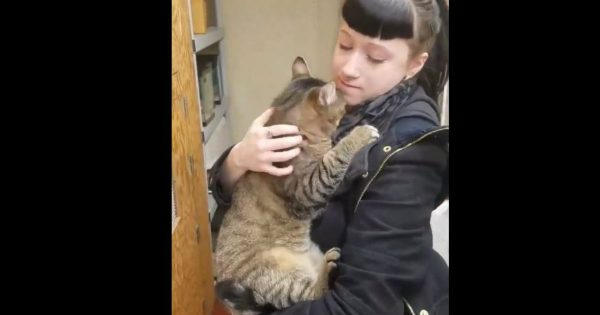 A Lady Found A Cat And He Would Not Let Go Of Her