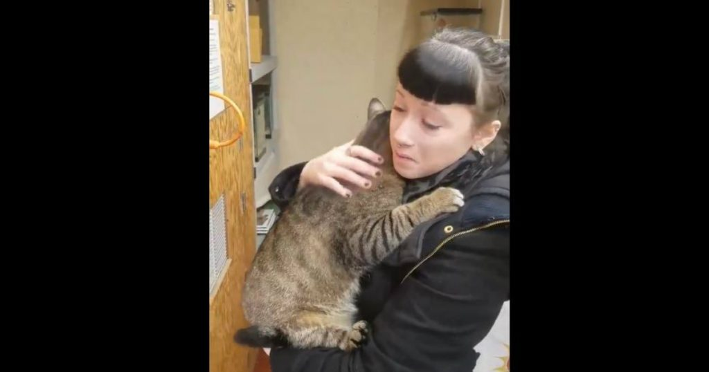 godupdates fat cat kept snuggling