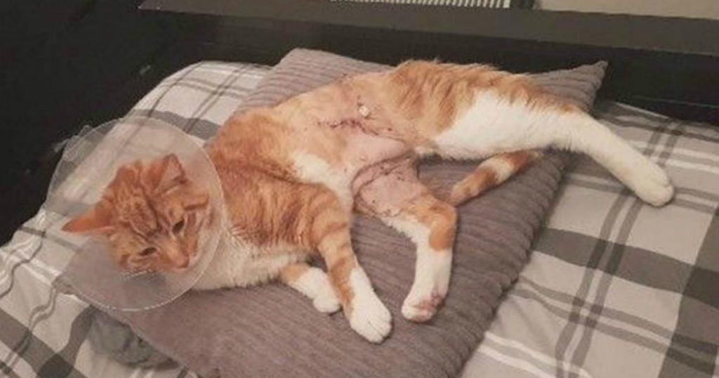 godupdates true survivor story of a cat impaled on fence 2