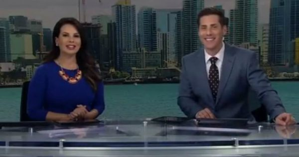 Bird Flew On Set And Landed On The News Anchor's Head On Live TV