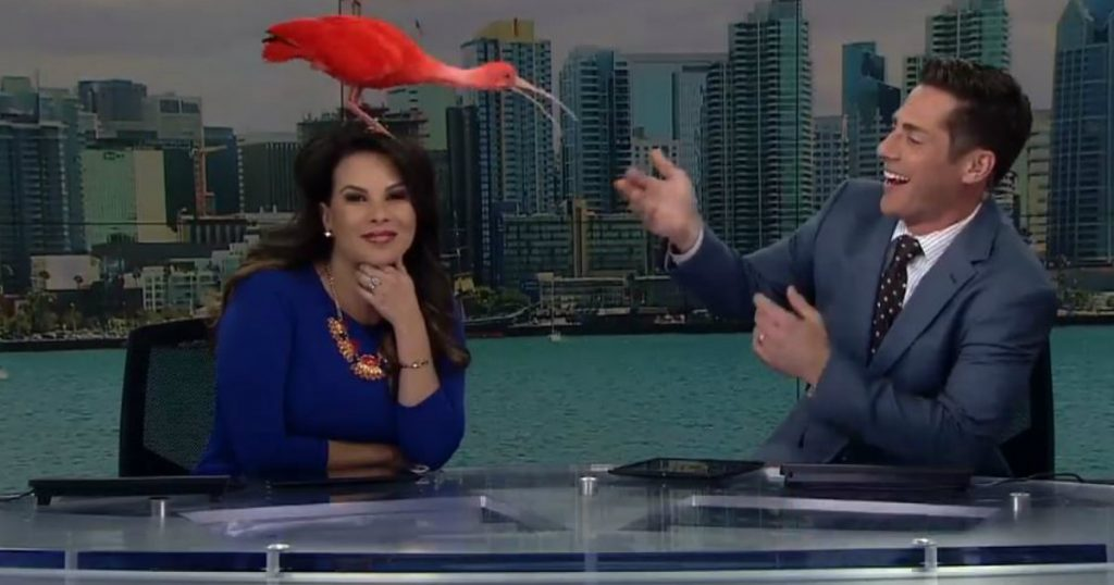 godupdates bird flew on news anchors head
