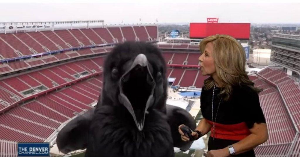godupdates bird photobombed meteorologist