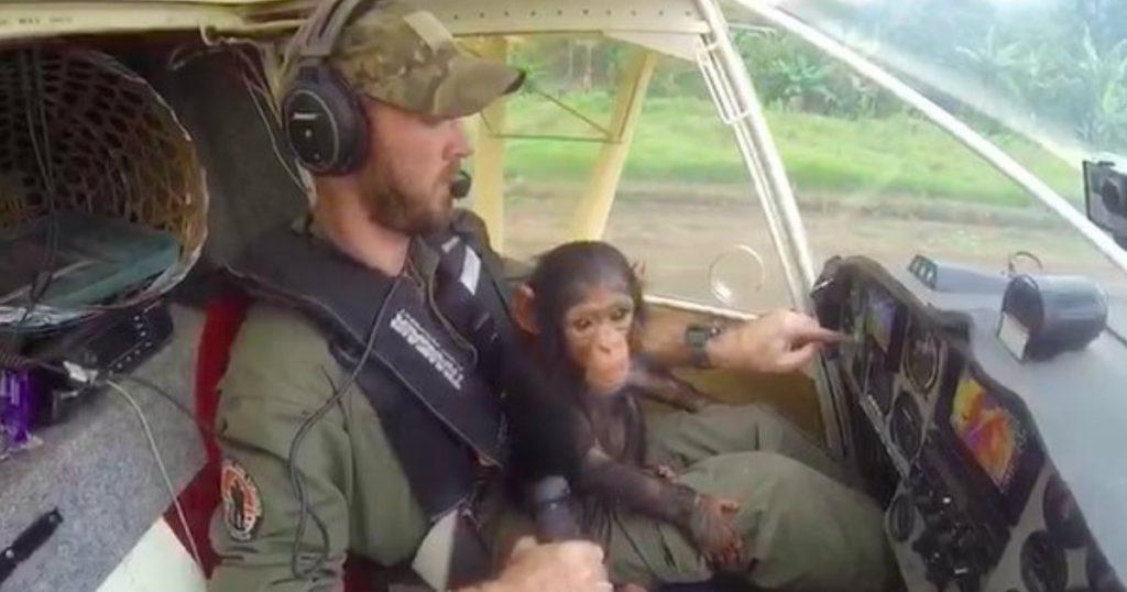 godupdates stolen 3-year-old chimpanzee